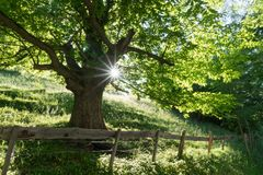 Arbre d'été en vert luxuriant avec la lumière du soleil brillant et une barrière et une route de rusticv dans le premier plan Photo stock