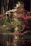 arbre d'étang Images stock