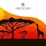Arbre d'acacia de carte de l'Afrique et silhouette de girafe Images stock