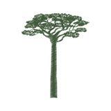 Arbre d'acacia de l'Afrique Images libres de droits