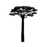Arbre d'acacia de l'Afrique Photographie stock libre de droits