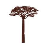 Arbre d'acacia de l'Afrique Photo libre de droits