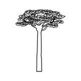 Arbre d'acacia de l'Afrique Photos libres de droits