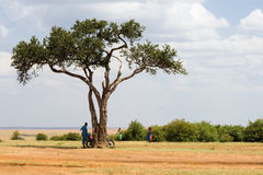Arbre d'acacia en parc de Mara National de masai Photos stock
