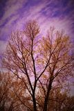 Arbre d'aquarelle Images stock