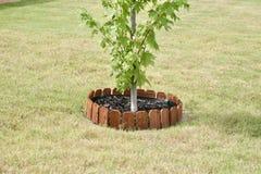 Arbre d'arbuste avec la barrière en bois Photographie stock