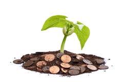 Arbre d'argent - élevez votre richesse photo libre de droits