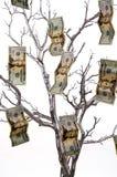 Arbre d'argent Photo libre de droits