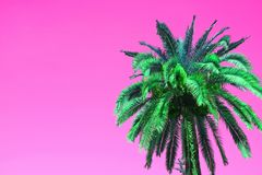 Arbre d'Art Style Vibrant Green Palm de bruit sur le fond rose vif images stock
