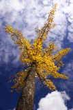Arbre d'automne photo stock