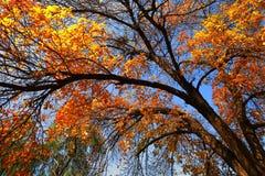 Arbre d'automne Images libres de droits