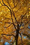 Arbre d'automne Images stock