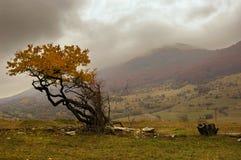 Arbre d'automne Photo stock