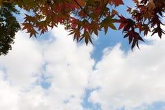 Arbre d'automne avec le tunnel de ciel bleu photo stock