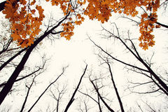 Arbre d'automne avec les lames jaunes Photo libre de droits