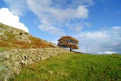Arbre d'automne/chute dans le paysage écossais Photos libres de droits