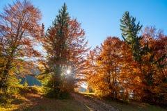 Arbre d'automne dans la forêt images stock