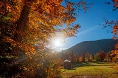 Arbre d'automne dans la forêt photo libre de droits