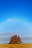 Arbre d'automne dans le domaine Images stock