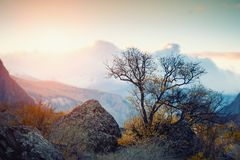 Arbre d'automne dans les montagnes au coucher du soleil photographie stock libre de droits