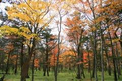 Arbre d'automne de Colorfull à nikko Japon Image libre de droits