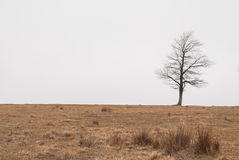 Arbre d'automne en brouillard Photo stock