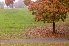 Arbre d'automne en parc Images libres de droits