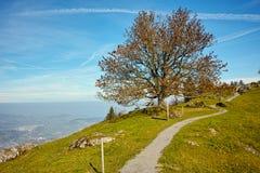 Arbre d'automne et panorama étonnant à la luzerne de lac, Alpes Images stock