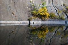 Arbre d'automne reflété dans le lac Photographie stock libre de droits