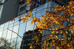 Arbre d'automne sur des rues de ville Image libre de droits
