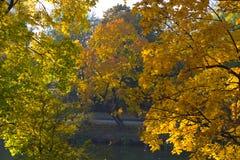 Arbre d'automne sur le parc à Kaliningrad images stock