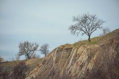 arbre d'automne sur une falaise Photo stock