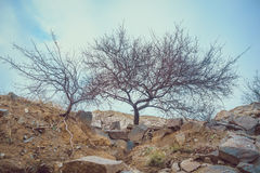 arbre d'automne sur une falaise Photo libre de droits