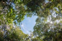 Arbre d'auvent de forêt à feuilles caduques mélangée en Thaïlande Images libres de droits