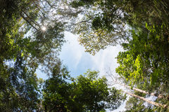 Arbre d'auvent de forêt à feuilles caduques mélangée en Thaïlande Photos libres de droits