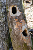 Arbre d'habitat Photo libre de droits