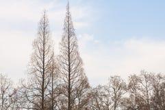 Arbre d'hiver  Photographie stock