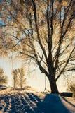 Arbre d'hiver au coucher du soleil Photos libres de droits