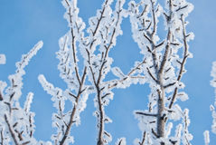 Arbre d'hiver au fond de ciel images libres de droits