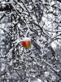Arbre d'hiver avec la pomme image stock