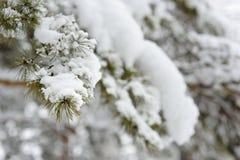 Arbre d'hiver dans la forêt Photographie stock