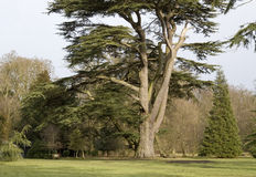 arbre d'ickworth de maison de jardin Photo stock