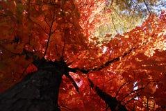 Arbre d'incendie Photographie stock libre de droits