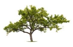 arbre d'isolement images libres de droits