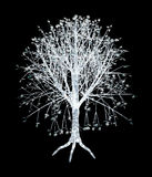 Arbre d'isolement illustration stock