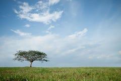 Arbre d'isolement avec le ciel bleu Images libres de droits