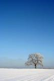 Arbre d'isolement en verticale de l'hiver Image libre de droits