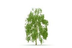 arbre d'isolement par bouleau illustration de vecteur