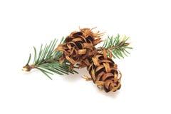 arbre d'isolement par Noël de branchement Image stock