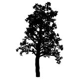 Arbre. D'isolement. Silhouette Illustration de Vecteur